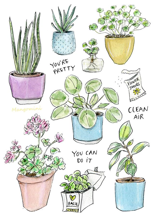 Plant appreciation day Mangomini