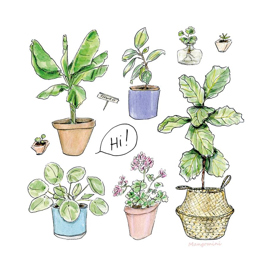 Mangomini plants hi2